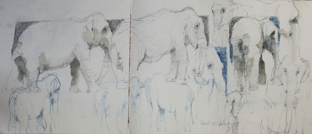 Eléphant au cirque/ crayon noir et couleur